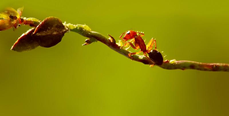 Bugs and Beetles - 139.jpg