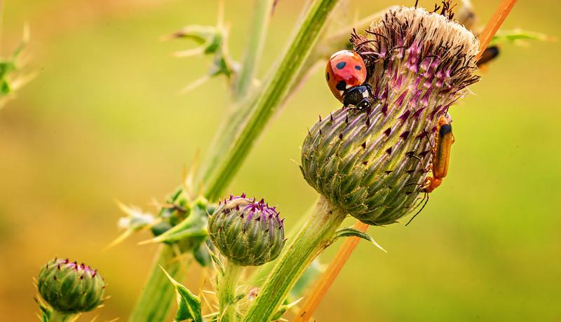Bugs and Beetles - 36.jpg