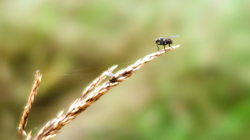 Bugs and Beetles - 179.jpg