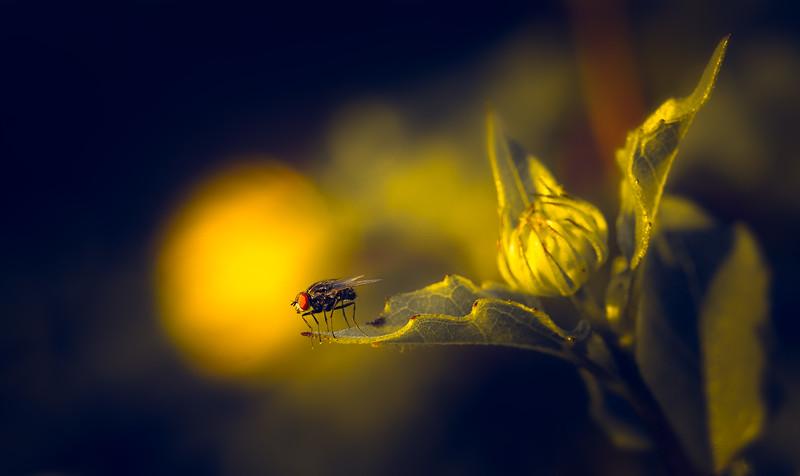 Bugs and Beetles - 166.jpg