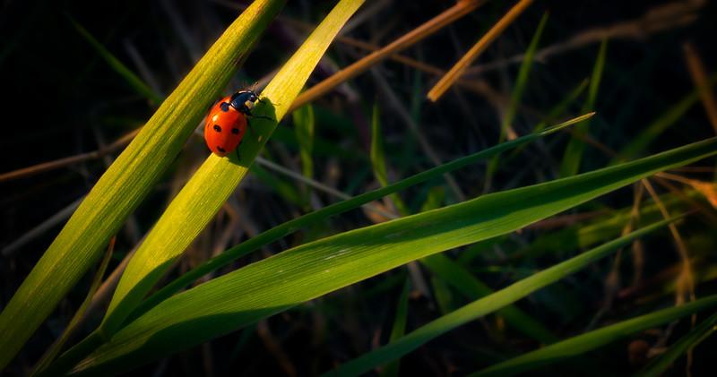Bugs and Beetles - 52.jpg