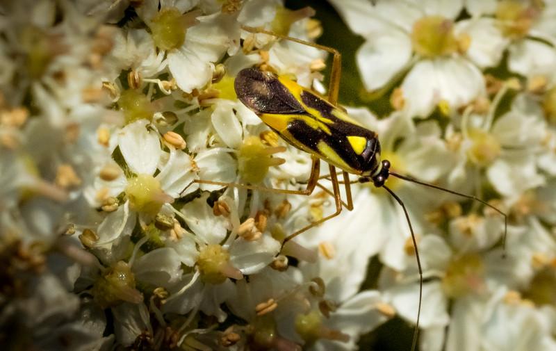 Bugs and Beetles - 12.jpg