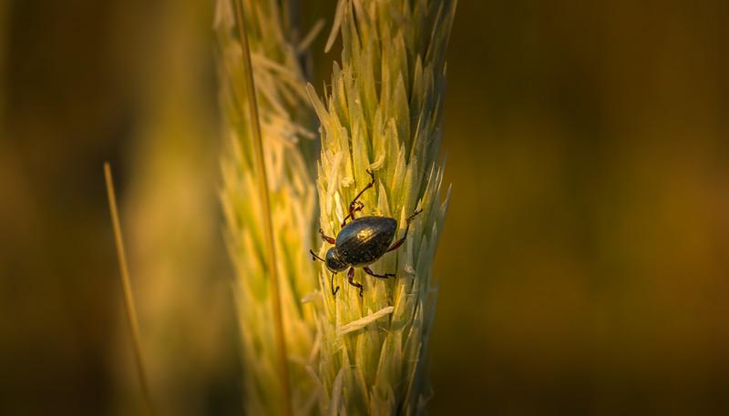 Bugs and Beetles - 19.jpg
