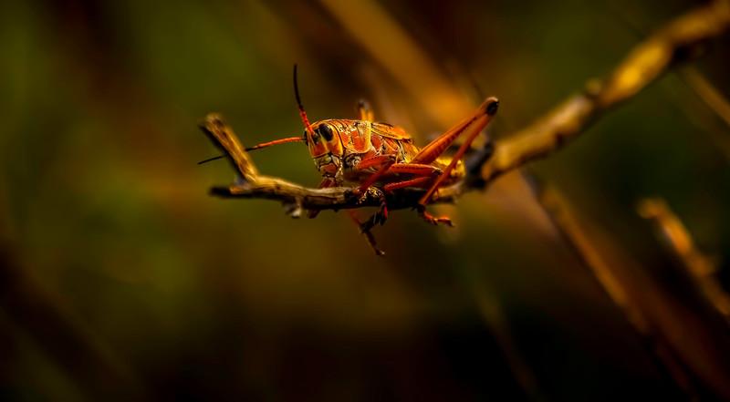 Bugs and Beetles - 190.jpg