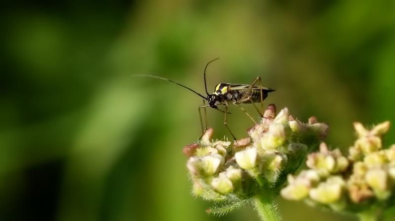 Bugs and Beetles - 34.jpg