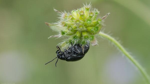 Beetle on Flower 2020 2