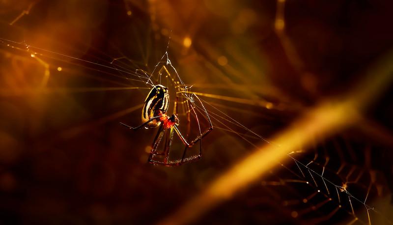 Bugs and Beetles - 4.jpg