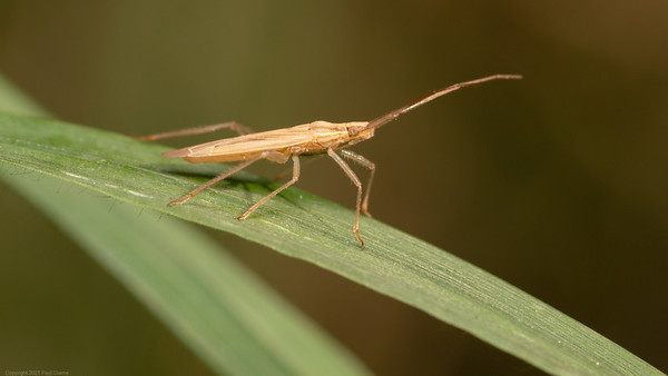 Bug by the canal