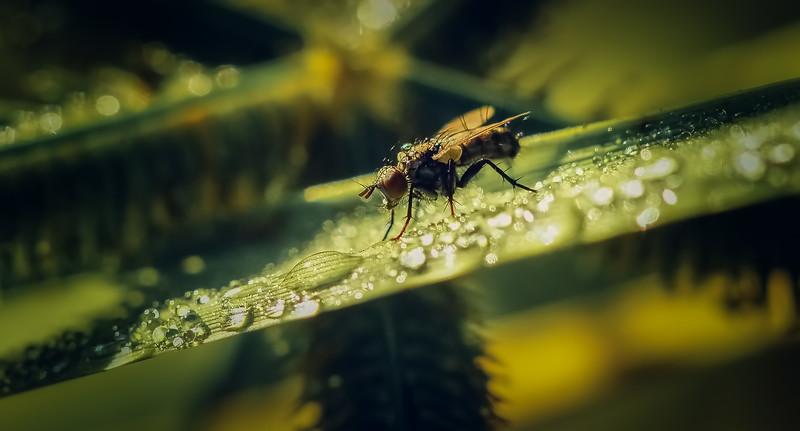 Ugly Bugs&Beautiful Beetles-205.jpg