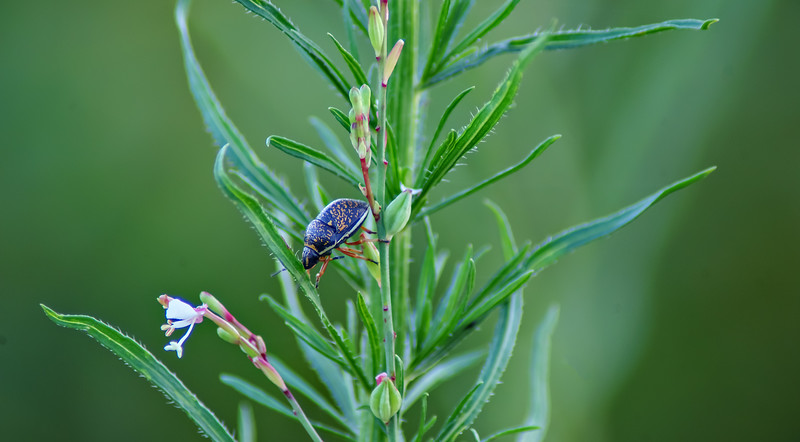 Bugs and Beetles - 141.jpg