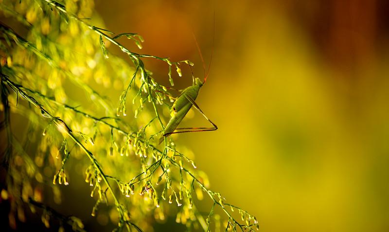 Bugs and Beetles - 156.jpg