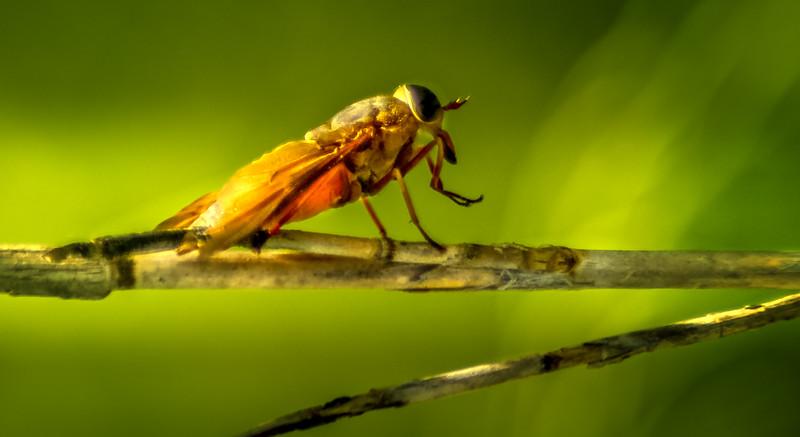 Bugs and Beetles - 199.jpg
