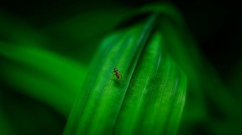 Bugs and Beetles - 122.jpg