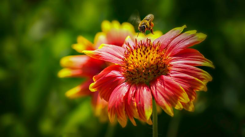 Ugly Bugs&Beautiful Beetles-200.jpg