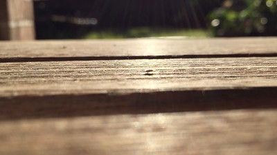 Bug Crossing Table