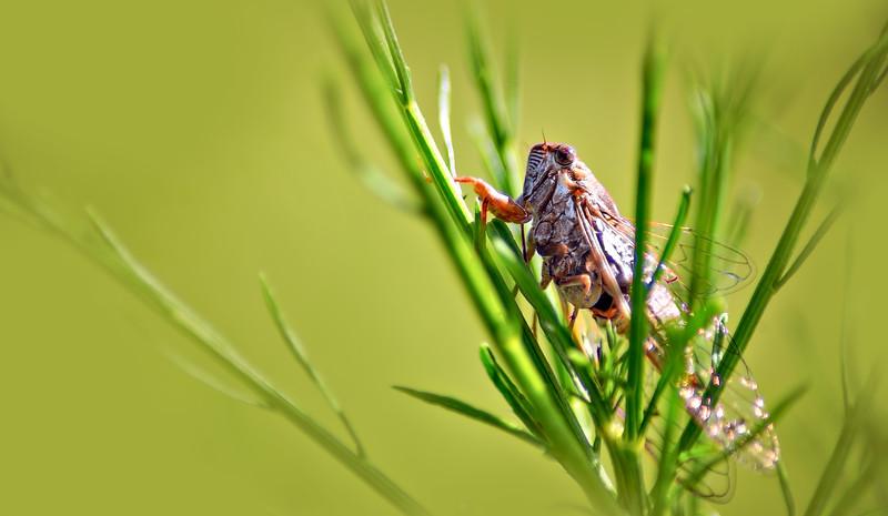Bugs and Beetles - 158.jpg