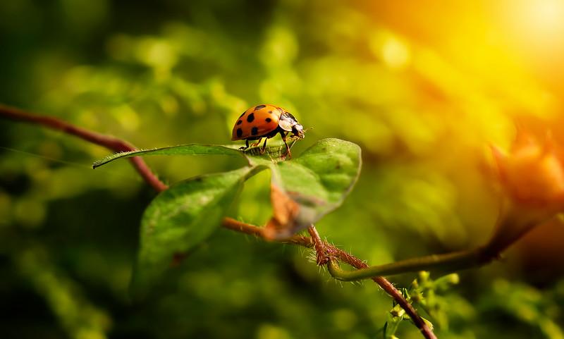 Bugs and Beetles - 65.jpg