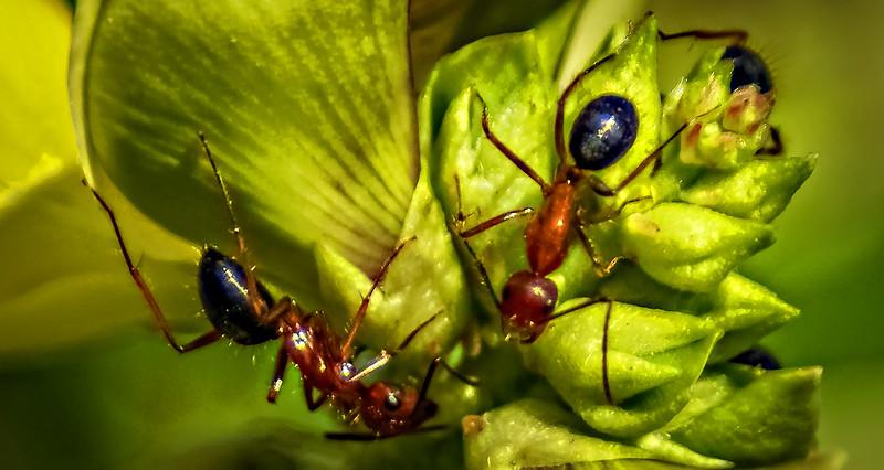 Bugs and Beetles - 33.jpg