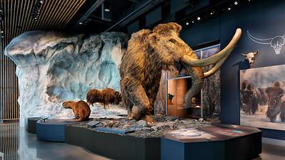 Pleistocene Diorama, Bell Museum
