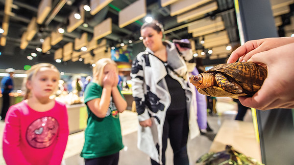 Touch & See Lab, Turtle