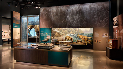 Minnesota Journeys exhibit, Bell Museum, North Woods Biome Wolves Mammoth