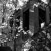 Adams Mill's Ruins