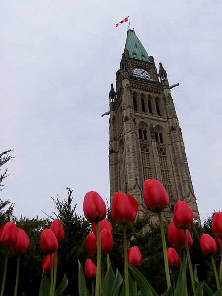 Peace Tower during the Tulip Festival. (Ottawa, Canada)