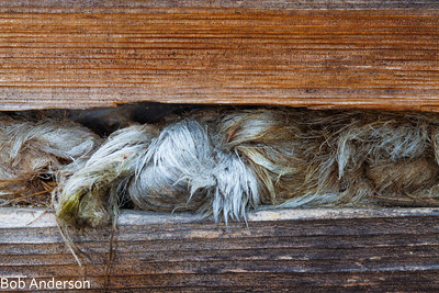 Horse hair was used for stuffing between the almost foot thick cedar logs that were used to build the 130 year old house.