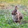 Everyone loves the bunnies at Adelphi so much so, they are considered our unofficial mascot!