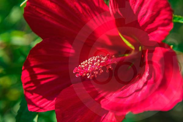 Athens_Botanical Gardens_4235