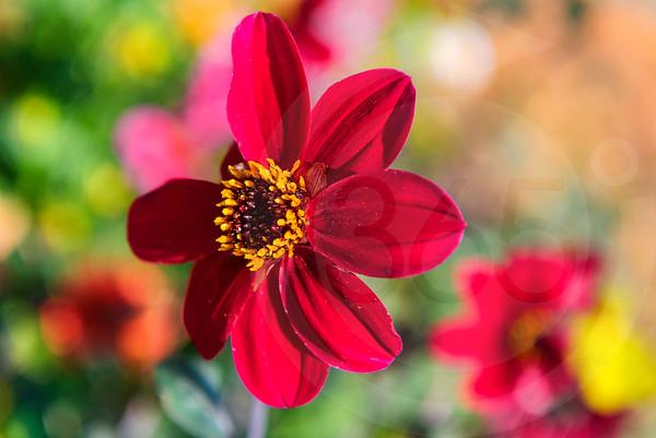 Athens_Botanical Gardens_4160