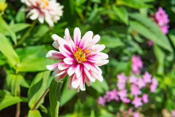 Athens_Botanical Gardens_4277