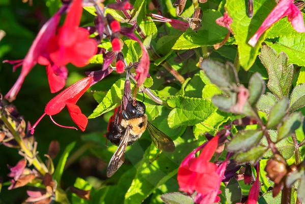 Athens_Botanical Gardens_4146