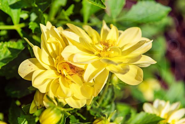Athens_Botanical Gardens_4170