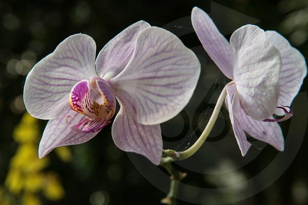 Athens_Botanical Gardens__4104