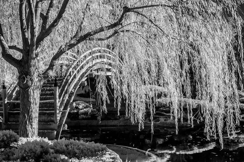 Infrared photo taken with a modified Canon 40D.