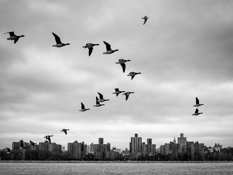 NYC2014-2677-Edit