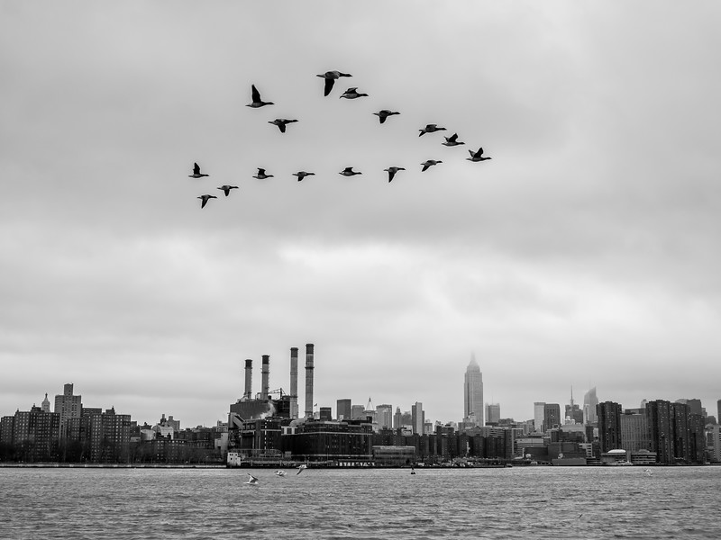 NYC2014-2681