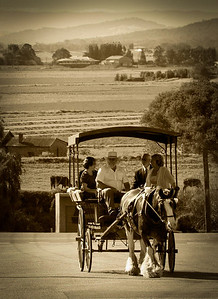 Horse and buggy, Morpeth, NSW