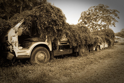 """Truck eating plants"" near Morpeth, NSW"