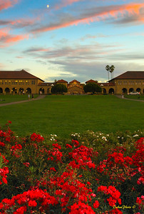 Stanford campus, on aug 27, 2009