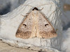 Moth Trap Dodford, Worcestershire, VC37