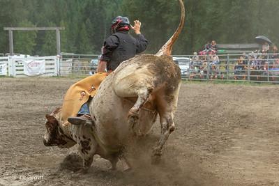 Bull Rider - Linden Hora