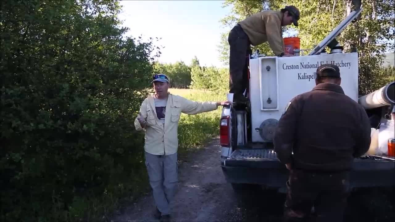 Video of the complete process Bull Trout to Grace Lake