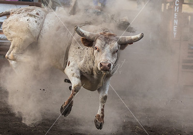 Bulls and Bull Riders