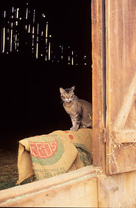 Caleb in barn.   Bumann ranch, Olivenhain, California.  1990