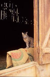 Caleb in barn.   Bumann ranch, Olivenhain, California.  1990