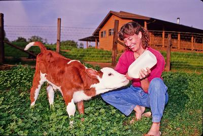 Twink feeding calf.  Bumann ranch, Olivenhain, California.  1993