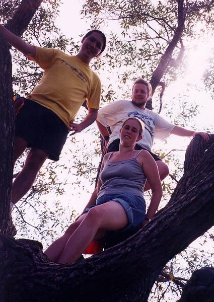 2000_Tree