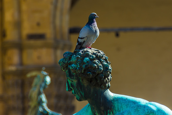 Sculpture with Pigeon, Piazza della Signoria, Florence, Italy